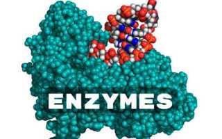 Лучшие энзимы и ферменты для пищеварения