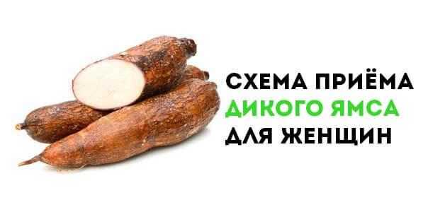 dikij-yams-dlya-zhenshchin-skhema-priyoma