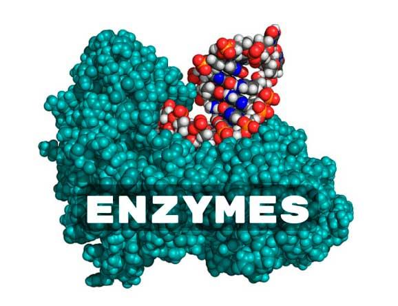 enzimy-dlya-pishchevareniya