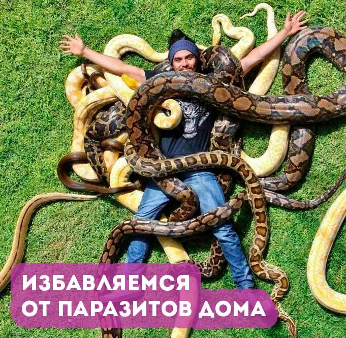 kak-izbavitsya-ot-parazitov-v-domashnih-usloviyah-bystro-i-effektivno