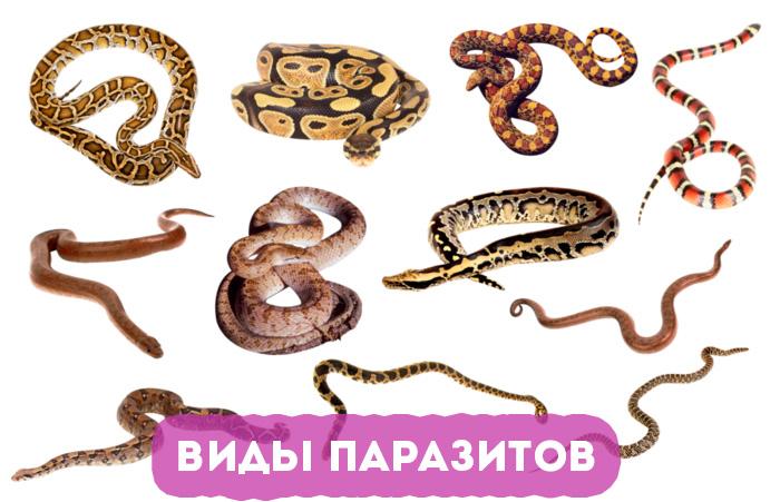 vidy-parazitov