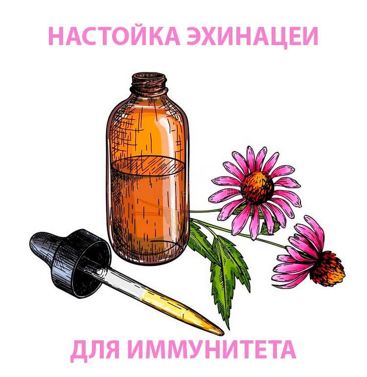 nastojka-ekhinacei-dlya-immuniteta