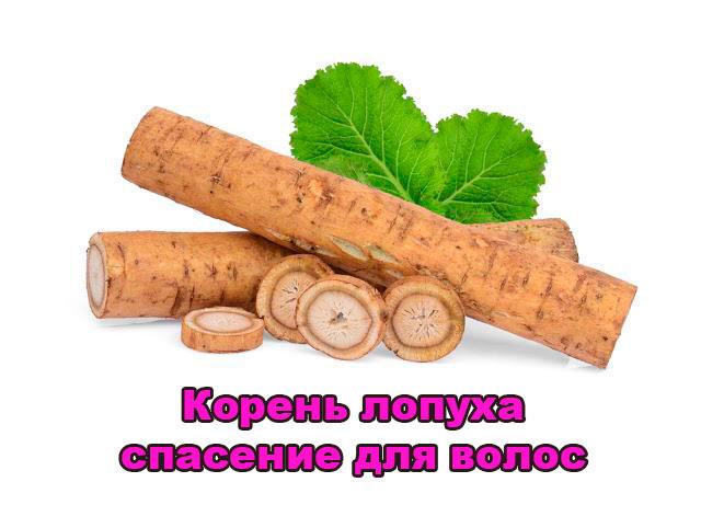 koren-lopuha-dlya-volos