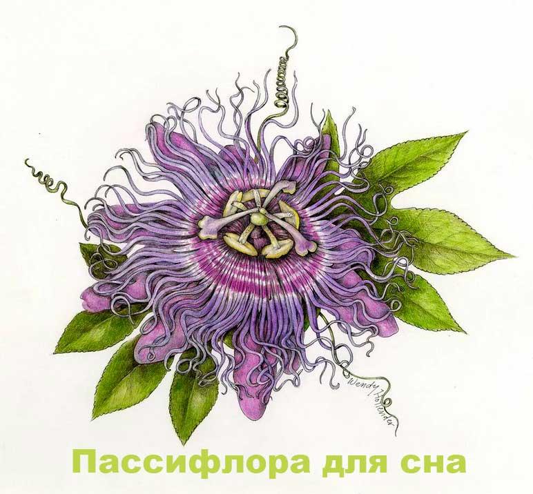 passiflora-dlya-sna
